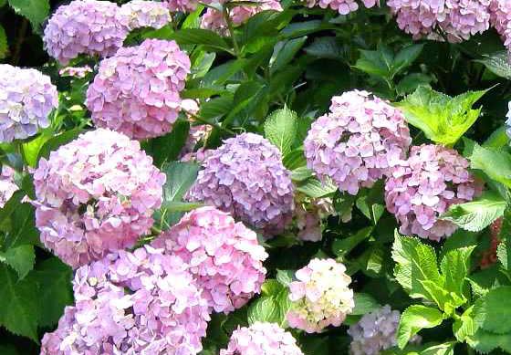 Copyr Giardinaggio - Equilibrio Naturale