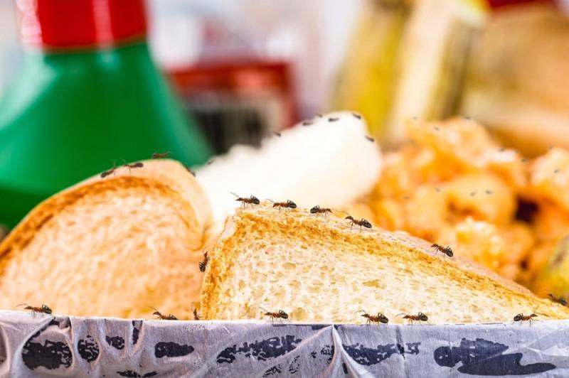 Come allontanare le formiche dalle nostre case pratiche - Come allontanare le formiche da casa ...